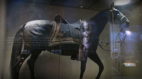Sergeant Stubby Museum Museum Secrets Heroic Pigeon