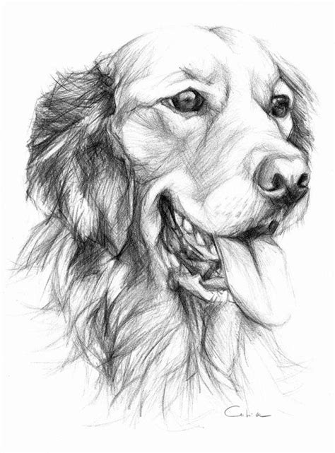 golden retriever drawing simple top easy drawings of golden retrievers images for tattoos