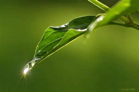 wallpaper daun berguguran bergerak gambar embun pagi puisi cinta embun pagi di daun mutiara