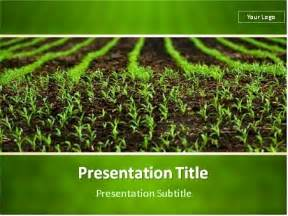 download field of corn sprouts powerpoint template 03