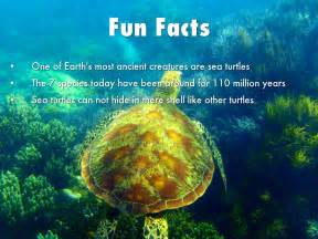 facts about green sea turtles by hcuevasbalanon