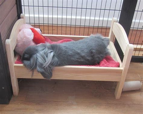 rabbit beds pin by ct on pets pinterest
