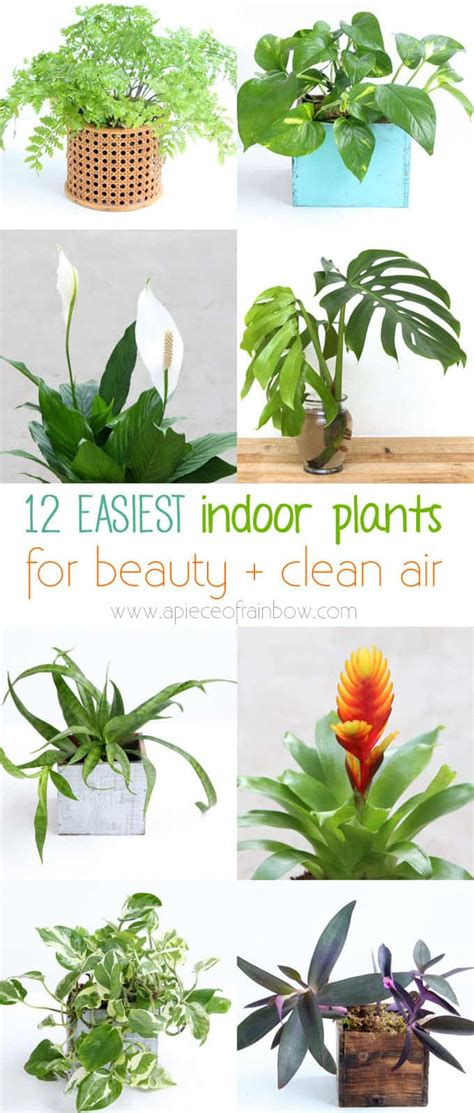 easiest indoor plants 12 easy indoor plants for beauty clean air a piece of
