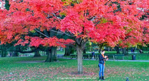boston fall foliage tours   sites   city