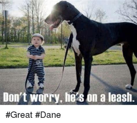 Great Dane Meme - 25 best memes about great dane great dane memes