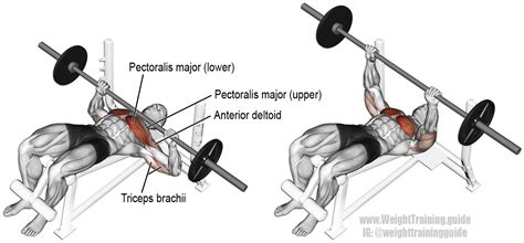 muscles worked by bench press decline barbell bench press guide and video weight