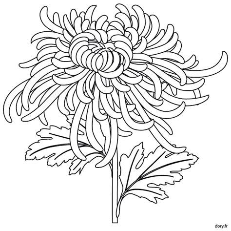 coloriage une fleur de chrysanth 232 me dory fr coloriages