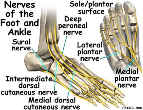 nerves in foot diagram ankle anatomy eorthopod