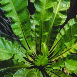 Entretien Fougere Exterieure by Foug 232 Re Plante D Ext 233 Rieur Gamm Vert