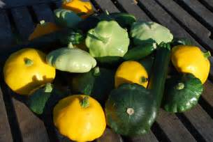 Best Type Of Fertilizer For Vegetable Garden - summer squash varieties varieties of summer squash types of summer squash