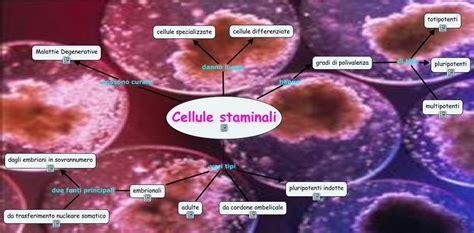 cellule staminali cellule staminali 雉 linee cellulari primarie