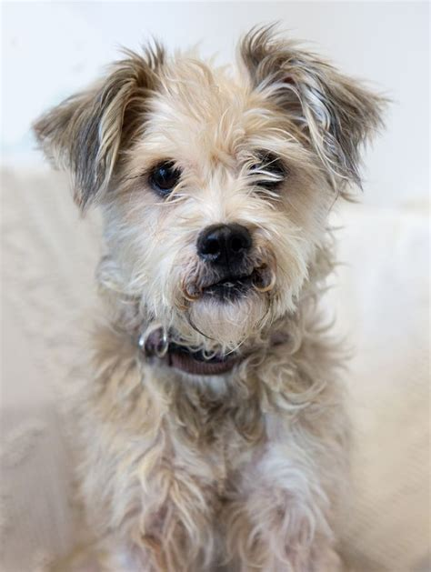 how to a terrier mix shelter dogs of portland quot quot charming terrier mix dogs