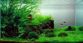 Artificial Plants For Tropical Fish Tanks - top 10 most beautiful freshwater aquariums of 2012 hungarian edition fpsbutest