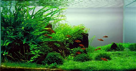 Freshwater Aquascaping Designs by Top 10 Most Beautiful Freshwater Aquariums Of 2012
