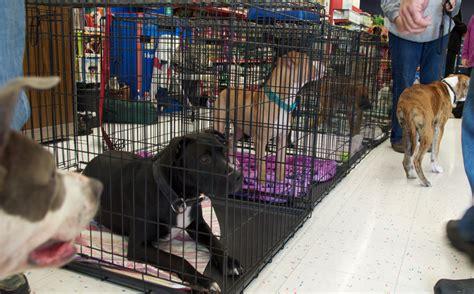 adoption events adoption events wishbone pet rescue