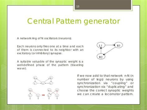 central pattern generator locomotion cat echo state networks and locomotion patterns