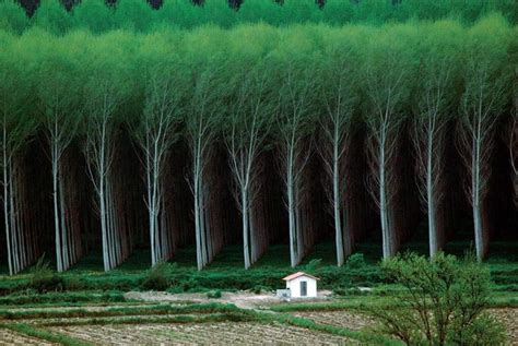 will tree farm tree farm oddlysatisfying