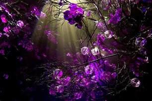 desktop wallpaper purple