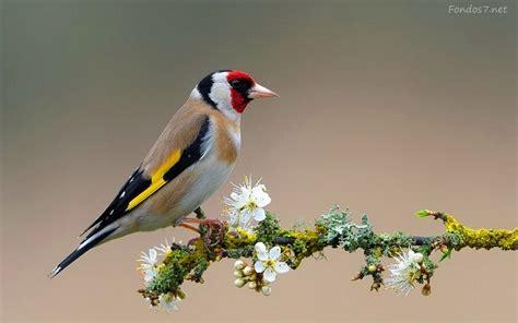 descargar fondos de pantalla tucan bird hd widescreen gratis descargar fondos de pantalla pajaro colores hd widescreen