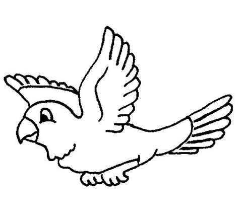 imagenes animales aereos para colorear dibujo de periquito para colorear dibujos net