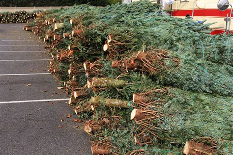 arlington optimist club christmas tree sale arlnow com