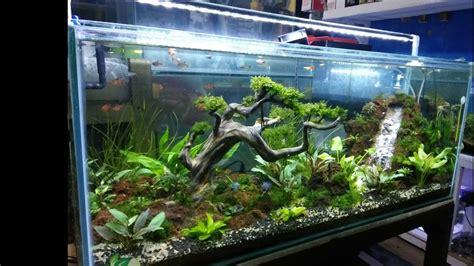 contoh  tank aquascape sederhana youtube
