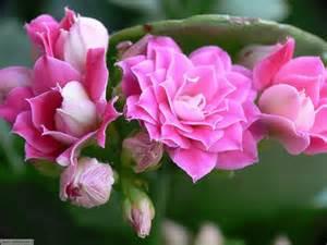 fiori australiani i fiori australiani l evoluzione della floriterapia