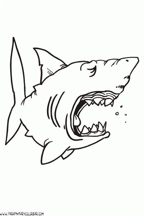 imagenes para colorear tiburon dibujos de tiburones 027