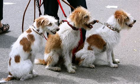 how to dogs to walk on a leash how to a easiest dogs to dogs and become a trainer