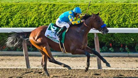 American Pharoah All the Buzz After Belmont Stakes