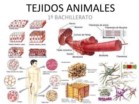 imagenes tejidos animales somos cientificos aprendiendo sobre cuerpo humano
