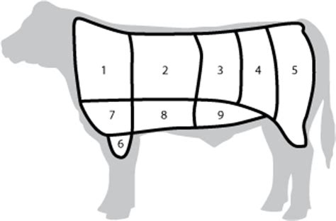 Beef Wholesale Cuts Worksheet meats master check free course on food