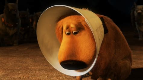 cone of shame the best alternatives to the classic cone of shame for dogs rover