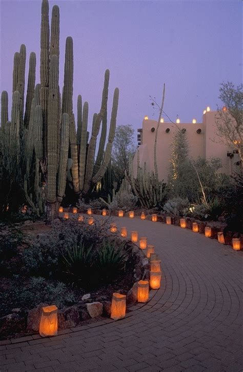 Desert Botanical Garden Luminaries 72 Best Images About Desert Landscaping On San Carlos Agaves And Arizona Cactus