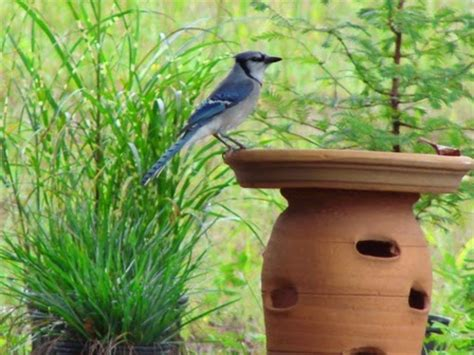 yard and garden secrets backyard bird habitat plants