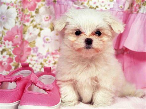 puppies background puppies wallpaper hd 20 widescreen wallpaper hivewallpaper