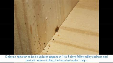 bed bugs in wood furniture signs of bed bugs in wood furniture bed bug hiding