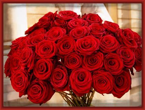 imagenes de rosas grandes hermosas vistosas imagenes de rosas hermosas rojas imagenes de rosa