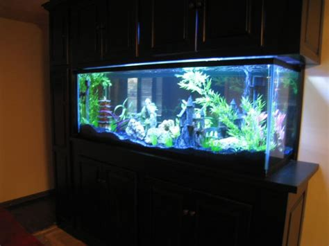 saltwater aquarium in wall 180 gallon in wall reef my 180 gallon in wall aquarium made from starphire glass