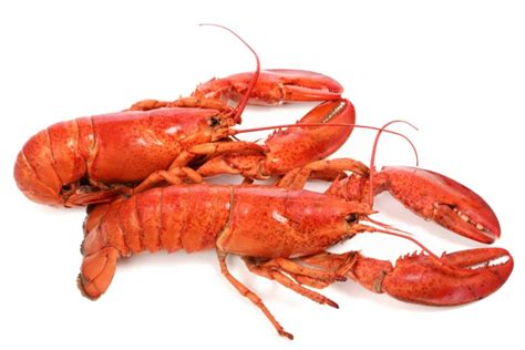 Cold Recipes by Lobsters Amp Shrimp Order Fresh Seafood Online Citarella