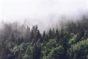Wall mural cloudy forest photo wallpaper fog happywall