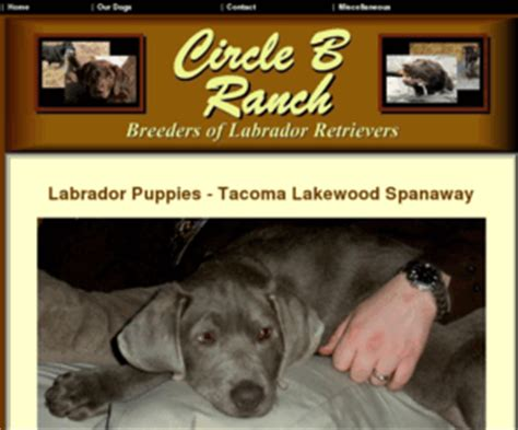 lab puppies for sale in washington state circleblabs labrador retriever puppies for sale tacoma lakewood spanaway