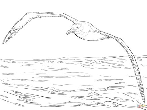Wandering Albatross In Flight Coloring Page Free