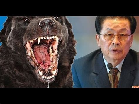 un dogs did jong un dogs eat his