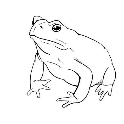 imagenes de un sapo para dibujar faciles dibujo de un sapo tutorial taringa