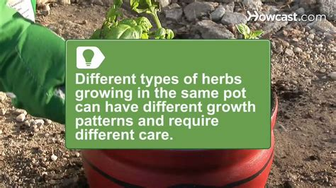 how to grow a herb garden how to grow a one pot indoor herb garden youtube