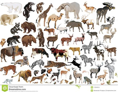 Animals Collection collection of color animals stock vector