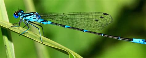 interesting facts on dragonflies you probably do not know