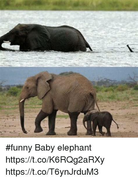 Baby Elephant Meme - funny baby elephant httpstcok6rqg2arxy httpstcot6ynjrdum3