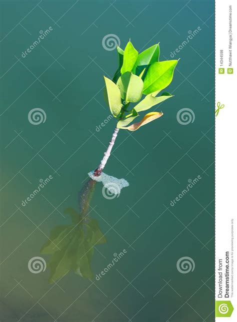 tree water solution tree growing in water royalty free stock photos